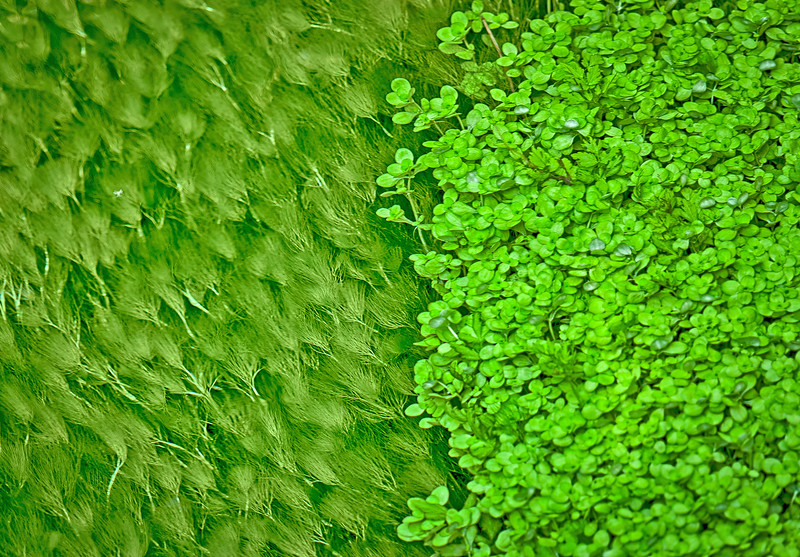 Olympic Shades of Green 24 x 36