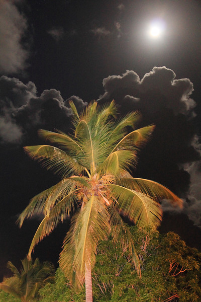 Full Moon over a Tropical Palm