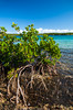 Mangrove bushes and shoreline at Half Moon Cay, Bahamas.