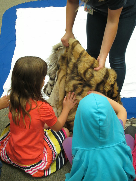 Caitlin gives the children the chance to feel the tiger pelt.