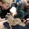 The kids are given the chance to pet the lizard from the Valley Zoo.