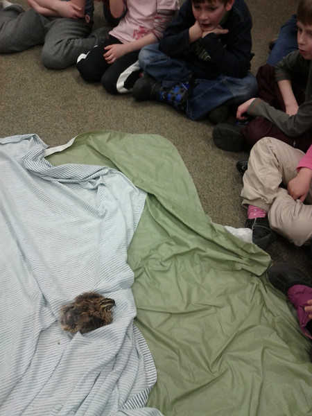 The kids learn about different animals, courtesy of the Edmonton Valley Zoo.