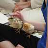 The Chick Trio