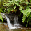 Cascade Waterfall, Leura - Blue Mountains, Australia