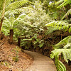 Soft tree ferns