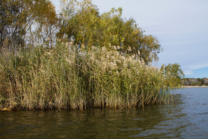 Reeds and grass growing in a lake