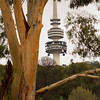 Telstra tower through the trees!