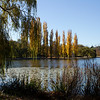 Autumn trees in a park, Canberra