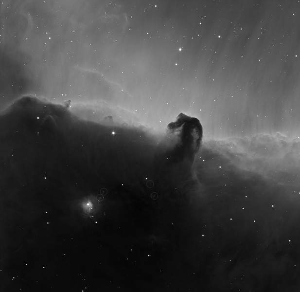 """Horsehead, NGC 2023, and 4 Herbig-Haro objects (circled). H-alpha, 6 x 1hr subs. Aspen 16M on 20"""" PlaneWave CDK on MI-750 fork. <br /> <br /> Clearly a sea-horse, emerging proudly from the salty spume. Observe the small rhino horn on the horse's nose. Bits of kelp are hanging from the horse's mouth. The horse is observing a Loch-Ness style sea-serpent, riding the breaker to the horse's left. Field 36 min arc, North on the left."""