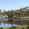 Banks of Googong Dam, Queanbeyan