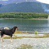 friendly dog, from RA3 view of Lago Escondido,  and drying mill, Tierra del Fuego, Patagonia