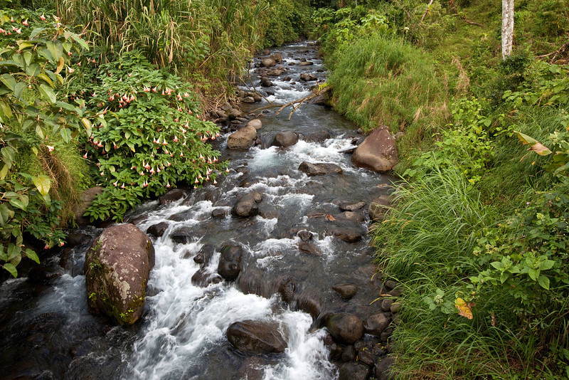 Forest Stream, Arenal area, Costa Rica