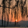 """Willow tree at sunset, West Lake, Hangzhou, China (best larger; note the small boat at the lower right)<br /> <br /> I was at a conference in Hangzhou, China, and one evening, when there was a marvellous sunset, our hosts took us for a boat ride on West Lake.  As I arrived at the lakeshore I saw the sun setting though the branches of a willow tree and it struck me that this scene was a quintessential Chinese painting.<br /> <br /> According to Wikipedia, West Lake has influenced poets and painters throughout China's history for its natural beauty and historic relics, and it has also been among the most important sources of inspiration for Chinese garden designers. It was made a UNESCO World Heritage Site in 2011, described as having """"influenced garden design in the rest of China as well as Japan and Korea over the centuries"""" and reflecting """"an idealized fusion between humans and nature""""<br /> <br /> Other photos of the West Lake sunset, and 3 panda photos, can be seen here: <a href=""""http://goo.gl/7FnjvH"""">http://goo.gl/7FnjvH</a><br /> <br /> 8/05/14  <a href=""""http://www.allenfotowild.com"""">http://www.allenfotowild.com</a>"""