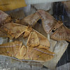 Dead silk moths