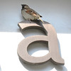 A is for Sparrow