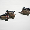 Wood Ducks, Central Park Reservoir