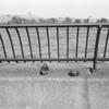 Pigeons, Carl Schurz Park promenade