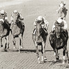 #4 Love Sign wins the Alabama Stakes at Saratoga on August 9, 1980. Photo by Bob Coglianese/NYRA