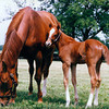 Genuine Risk and foal Genuine Reward in 1993 Photo by: Anne M. Eberhardt