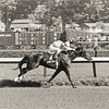 #4 Love Sign wins the Alabama Stakes at Saratoga on August 9, 1980. The Blood-Horse Library