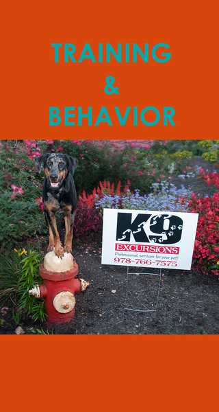 TRAINING AND BEHAVIOR