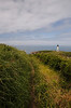 Road to the Lighthouse - Yaquina Head Lighthouse, Oregon - Emily Jacob - June 2013