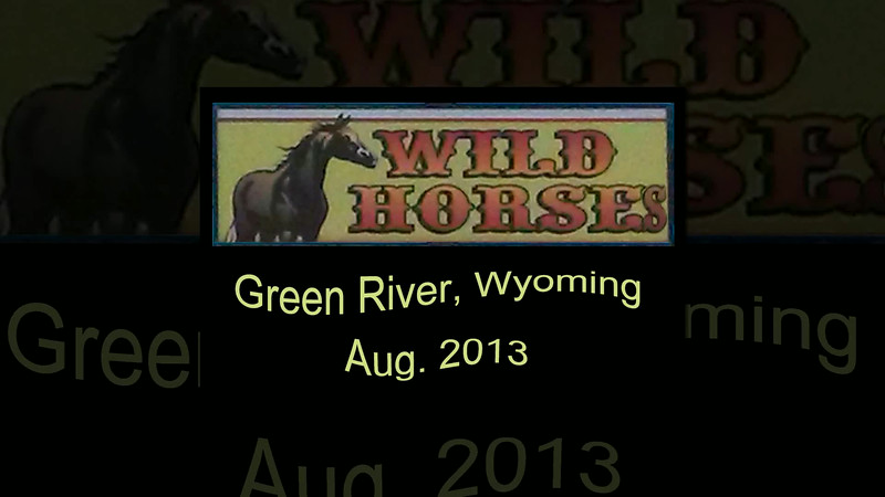 Wild Horse Adventure  Aug. 2013  By: Chris Sprik