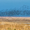 Swarms of feathered friends;