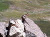 A Chipmunk rests on a rock high above Belford Gulch between Mt. Belford and Mt. Oxford.