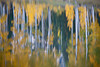 Reflections of aspen (Populus tremuloides) and pines in Rowdy Lake. Taken in the Uncompahgre National Forest, Colorado, USA.