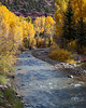 Narrowleaf cottonwood (Populus angustifolia) trees lining the San MIguel River near Telluride, Colorado, USA.