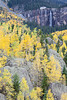 Bridal Veil Falls can be seen atop a cliff, with aspen (Populus tremuloides) below. Taken in Telluride, Colorado, USA.