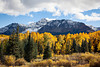 Mt. Wilson and fall color of willows and aspen (Populus tremuloides). Taken in the Uncompahgre National Forest, Colorado, USA.