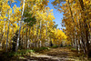 Silver Jack Campground in fall. Taken in the Uncompahgre National Forest, Colorado, USA.