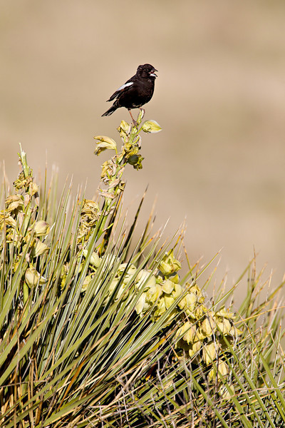 Taken in the Pawnee National Grassland, Colorado, USA.