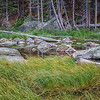 Grass, Dream Lake outlet