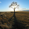 A lone tree on the high plains of Colorado