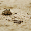 A Toad in the Sand