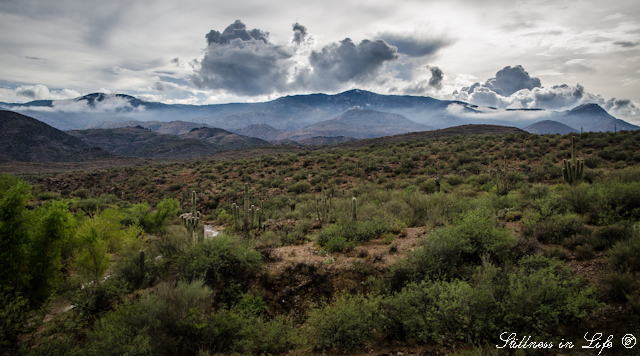 The Bradshaw Mountains are a mountain range in the Sonoran Desert of central Arizona, named for brothers Isaac and William Bradshaw.  Once thought to be rich in gold, copper and silver, the Bradshaw Mountains are now host to many historic ghost towns.