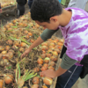 University at Albany students volunteer at the Regional Food Bank's Patroon Land Farm in Voorheesville, NY  to weed, harvest, wash and box produce.