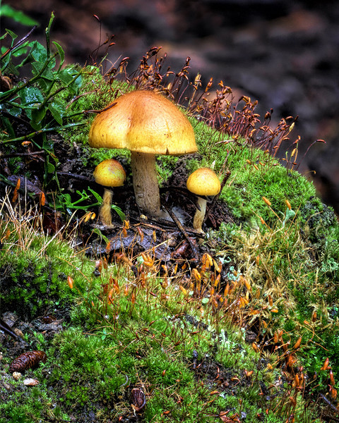 Maker:  Wayne Tabor<br /> Title:  Tiny Forest<br /> Category:  Macro/Close Up<br /> Score:  11