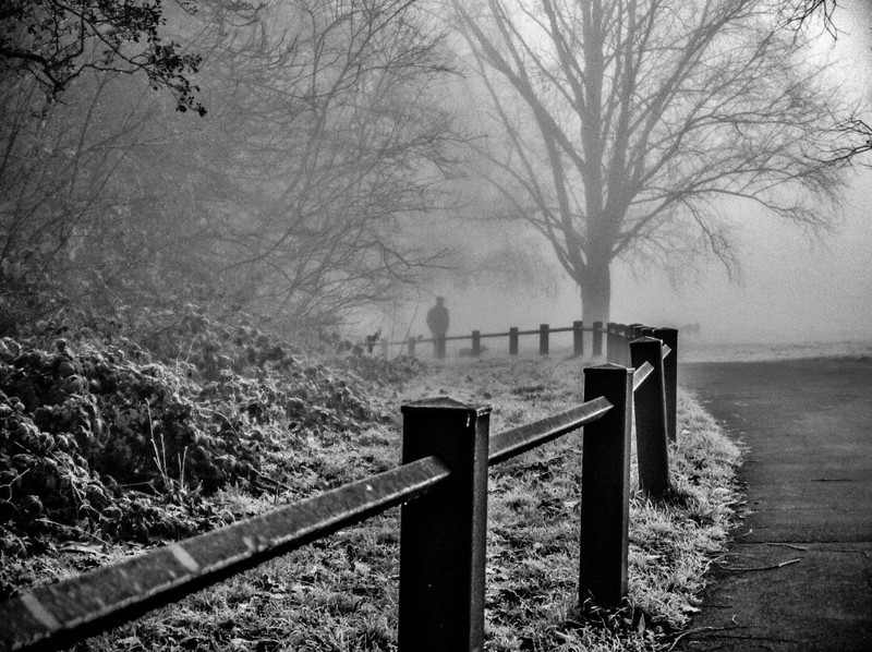 Grovelands Park Fog