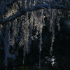 Description - Spanish Moss <b>Title - Spanish Moss</b> <i>- John Block</i>