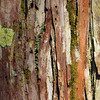 Description - Lichens and Moss on Cypress Tree <b>Title - Mini-Garden on Cypress Tree Trunk</b> <i>- Meg Puente</i>