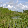 <b>Title - Cattails View</b> <i>- Phoenix</i>