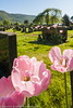 Flowers at Cemetery