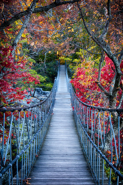 Autumnal Bridge
