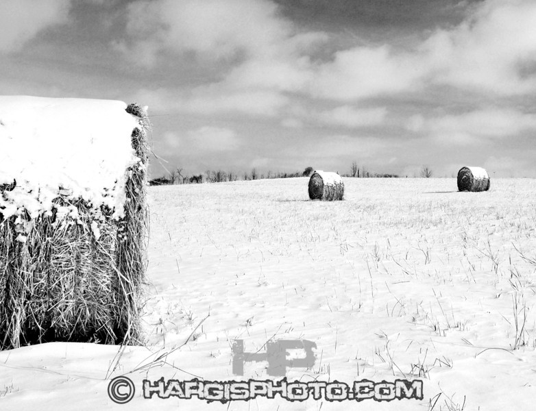 """0006 (C) 2012 Hargis Photography, All Rights Reserved,  <a href=""""http://www.dmhargisphotography.com"""">http://www.dmhargisphotography.com</a>"""
