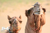 """Faces"", Thar Desert, Rajasthan, India, 2007 Print IND3926-238"