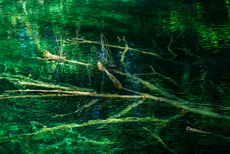 Dead under water in Plitvica Park